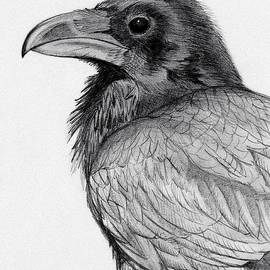 Philip Harvey - Sketchy Raven Study