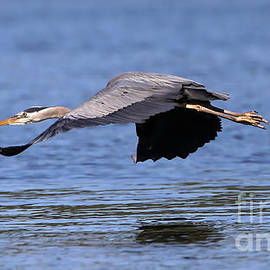 Skimming the Surface by Sue Harper