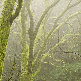 SKN 3726 Fog and Moss by Sunil Kapadia