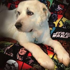 Doug Kreuger - Skywalker