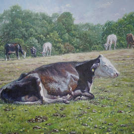 Sleeping Cow On Grass On Sunny Day by Martin Davey