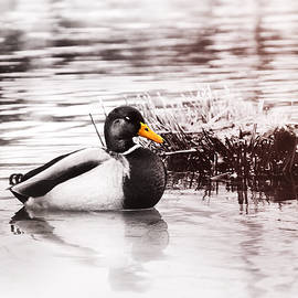 Sleeping Duck by Jaroslav Buna