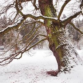 Jenny Rainbow - Sleeping Winter Giant. Pruhonice. Prague