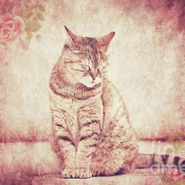 KaFra Art - Sleepy Cat
