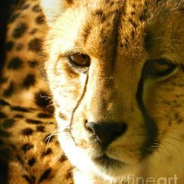 Emmy Marie Vickers - Sleepy Cheetah Cub