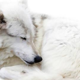 Athena Mckinzie - Sleepy Wolf