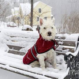 Small Dog Park Bench Snow Storm - Edward Fielding