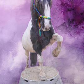 Smart Gypsy Horse by Elisabeth Lucas