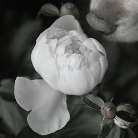 Yuri Lev - Smelling the Roses