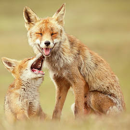 Smiling Foxes on World Smile Day by Roeselien Raimond