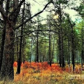 Lauren Leigh Hunter Fine Art Photography - Smoky Days Up The Creek