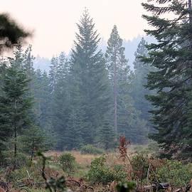 Valhalla Warrior Photography - Smoky Klamath Falls Oregon