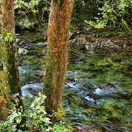 HH Photography of Florida - Smoky Mountain Stream