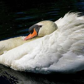 Linda Howes - Smooth Swan