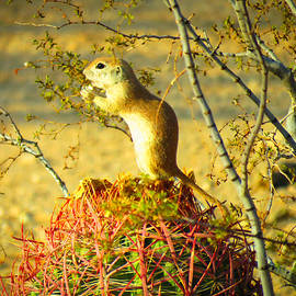 Critter on a Cactus by Judy Kennedy