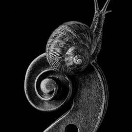 Snail Exploring Violin Scroll by Garry Gay