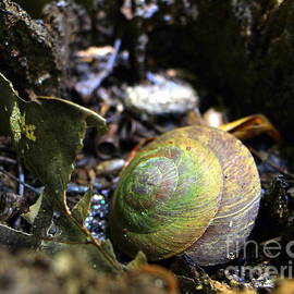 Snail in El Yunque Puerto Rico by Charlene Cox