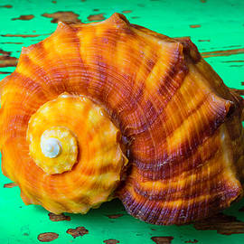 Garry Gay - Snail Sea Shell On Green Board