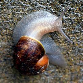 Michele Avanti - Snail snailing along