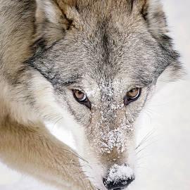 Athena Mckinzie - Sneaky Wolf