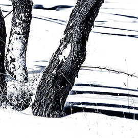 Snow and Shadows by Karen Slagle