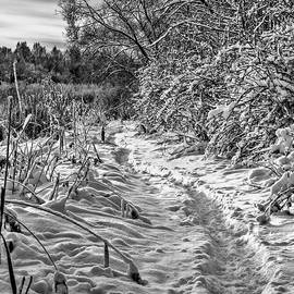 snow and sky BW #f3 by Leif Sohlman
