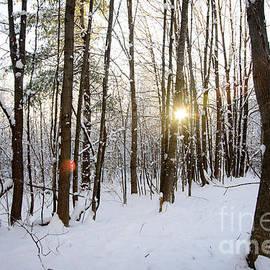 Alana Ranney - Snow and Trees