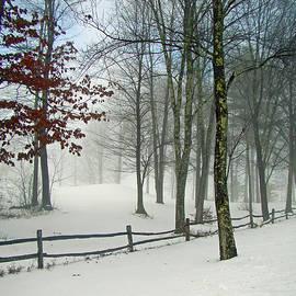 Snow Begins by Betsy Zimmerli