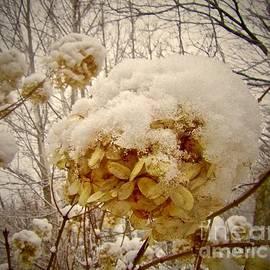 Elizabeth Tillar - Snow Blossom