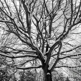 Sofia Ferreira - Snow branches