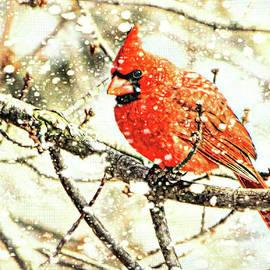 Tina LeCour - Snow Cardinal
