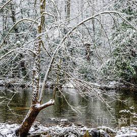 Thomas R Fletcher - Snow Cranberry River