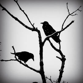 Brenda Conrad - Snow Crows
