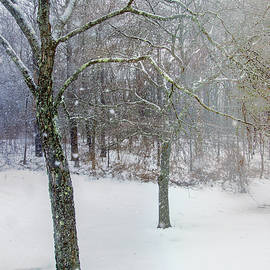 Terry Davis - Snow Falling