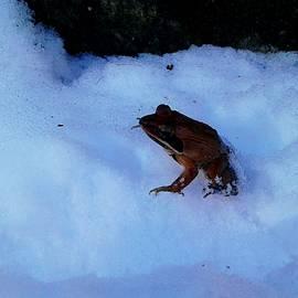 Joe D Dry - Snow frog