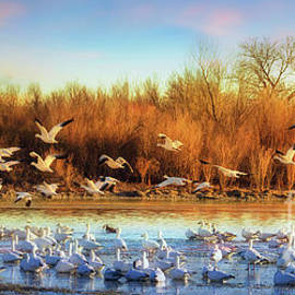 Priscilla Burgers - Snow Geese Flyout