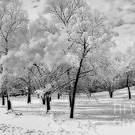 Luther Fine Art - Snow in South Park