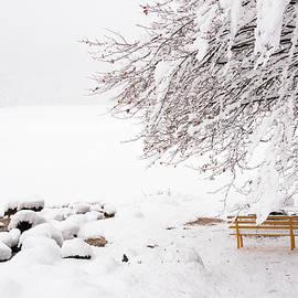 Nicola Simeoni - Snow Lake Fusine. Yellow Bench