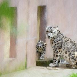 Cindi Alvarado - Snow Leopard Mama and Baby at Zoo