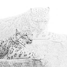 Jennie Marie Schell - Snow Leopards Monochrome
