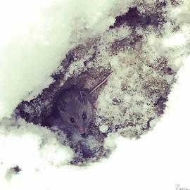 Snow Mouse by Rasma Bertz