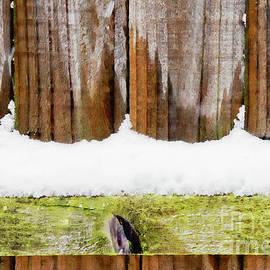 Snow on a fence - Tom Gowanlock