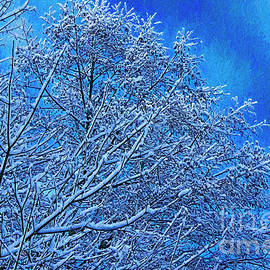 Snow On Branches Photo Art by Sharon Talson