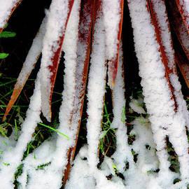 Snow on plant leaves - Tom Gowanlock