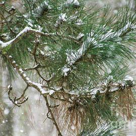 Snow Pines by Stephanie Hanson