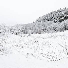 Snow Scene by Larry Ricker