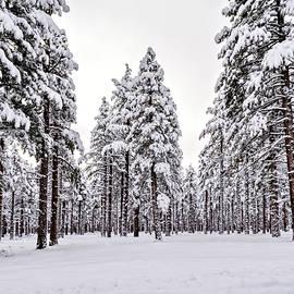 Maria Coulson - Snow Sentinels