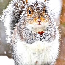 Danielle Sigmon - Snow Squirrel