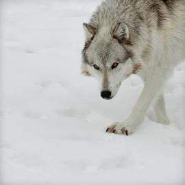 Steve McKinzie - Snow Tracker