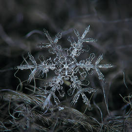 Alexey Kljatov - Snowflake 2 of 19 March 2013